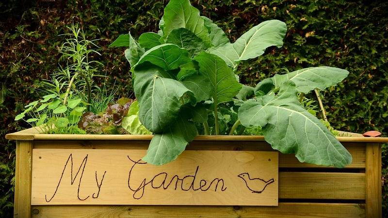 what is raised bed gardening
