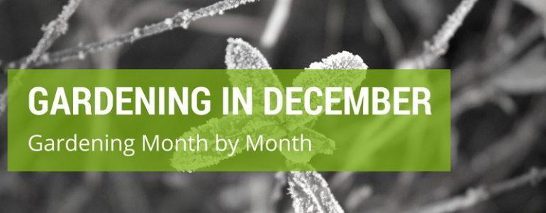gardening in december