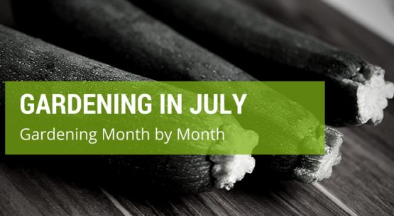 gardening in july