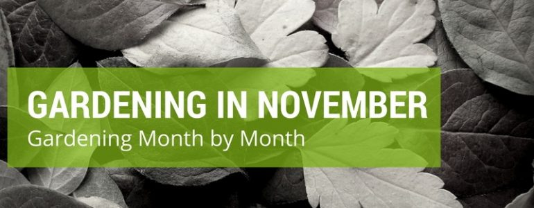 gardening in november