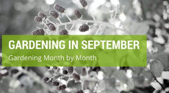 gardening in september