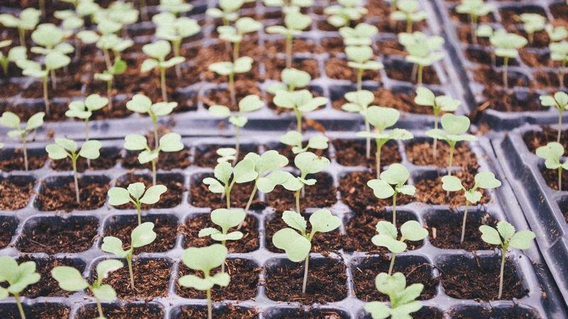 Choosing & planting