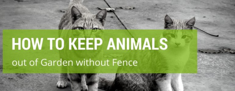 how to keep animals out of your garden without fence - How To Keep Animals Out Of Garden