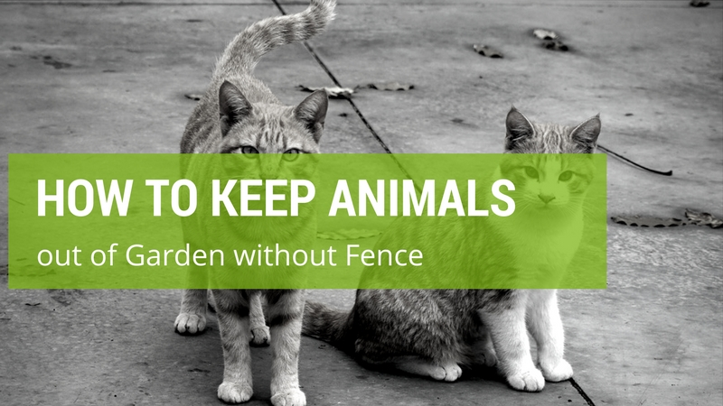 How To Keep Animals Out Of Your Garden Without Fence