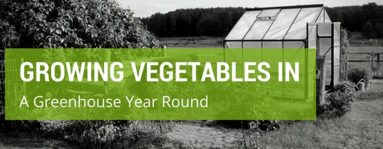 growing vegetables in a greenhouse year round