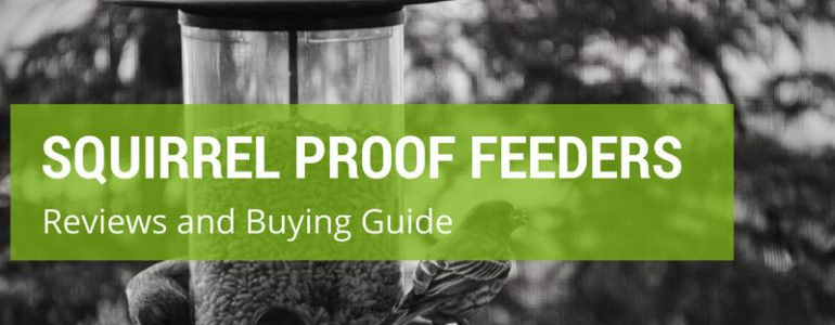 Which Are The Best Squirrel Proof Bird Feeders?