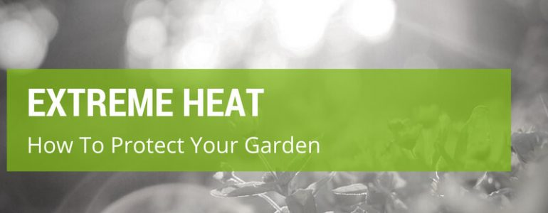 how to protect garden from extreme heat