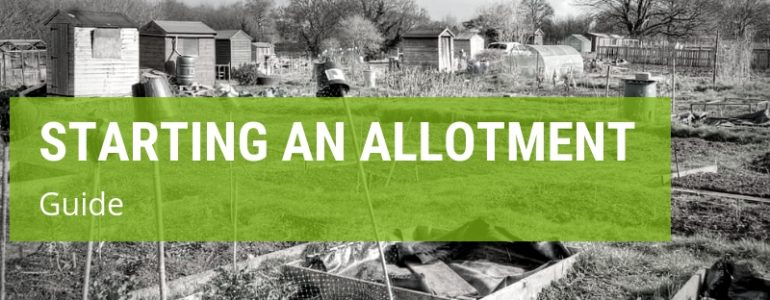 how to start an allotment from scratch