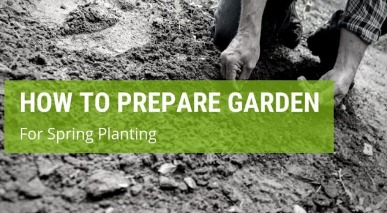 how to prepare your garden for spring planting