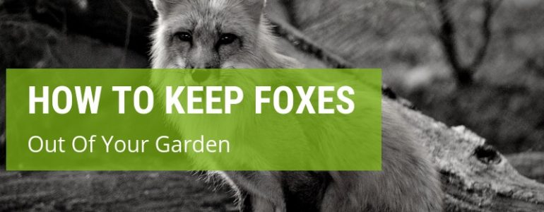 how to keep foxes out of your garden