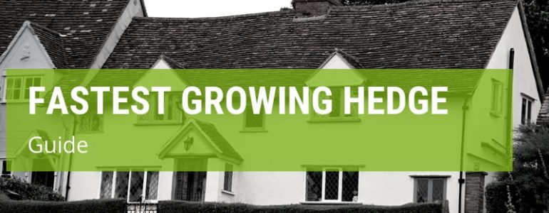 what is the fastest growing hedge