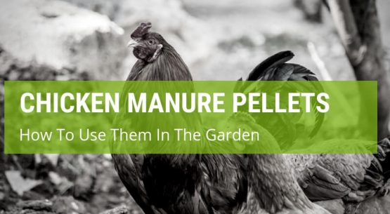 how to use chicken manure pellets in the garden
