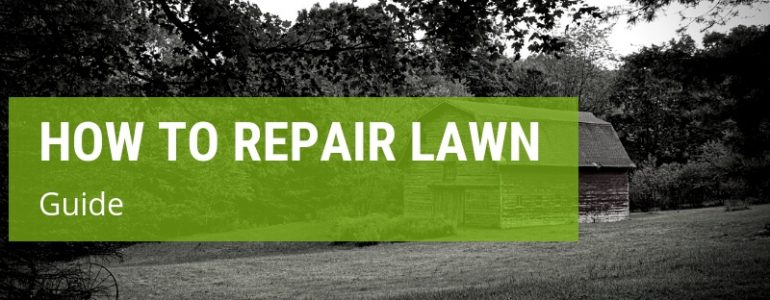 how to repair lawn
