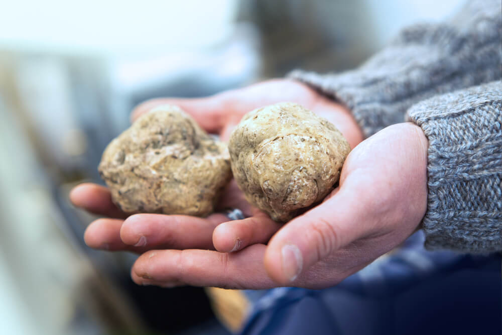 Choose the right type of truffle