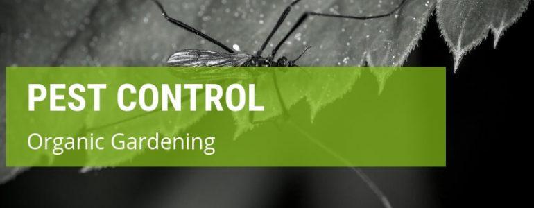 organic gardening pest control