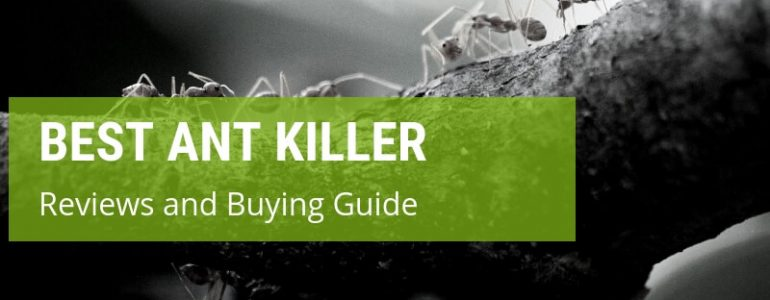 A Comprehensive Guide To The Best Ant Killers