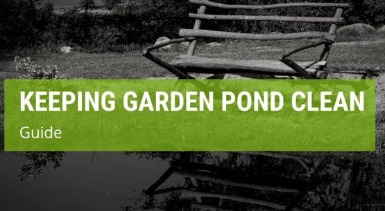 how to keep garden pond clean