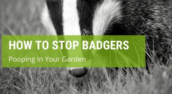 how to stop badgers pooping in your garden