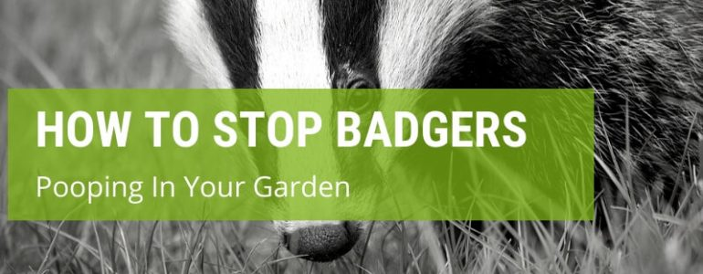 how to stop badgers pooping in your garden