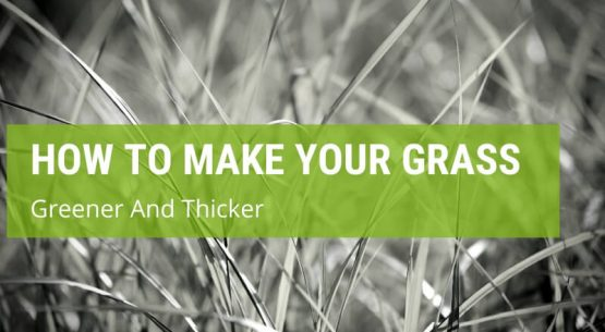 how to make your grass greener and thicker