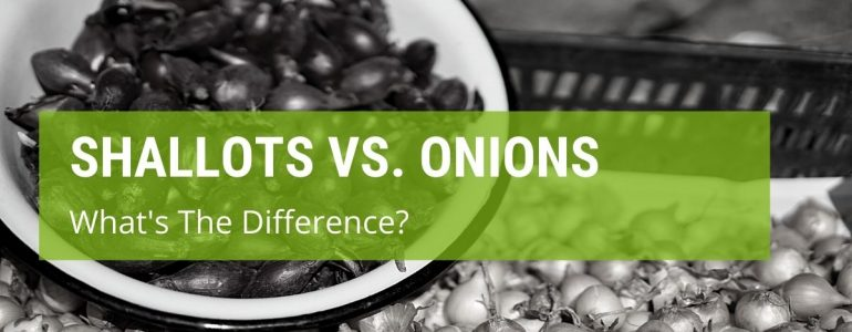 what is the difference between shallots and onions