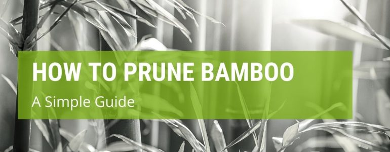 how to prune bamboo