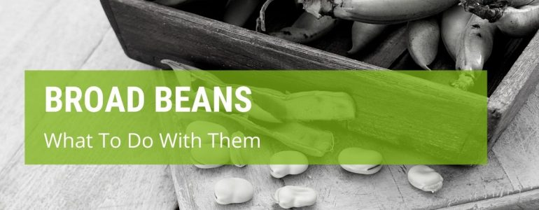 what to do with broad beans