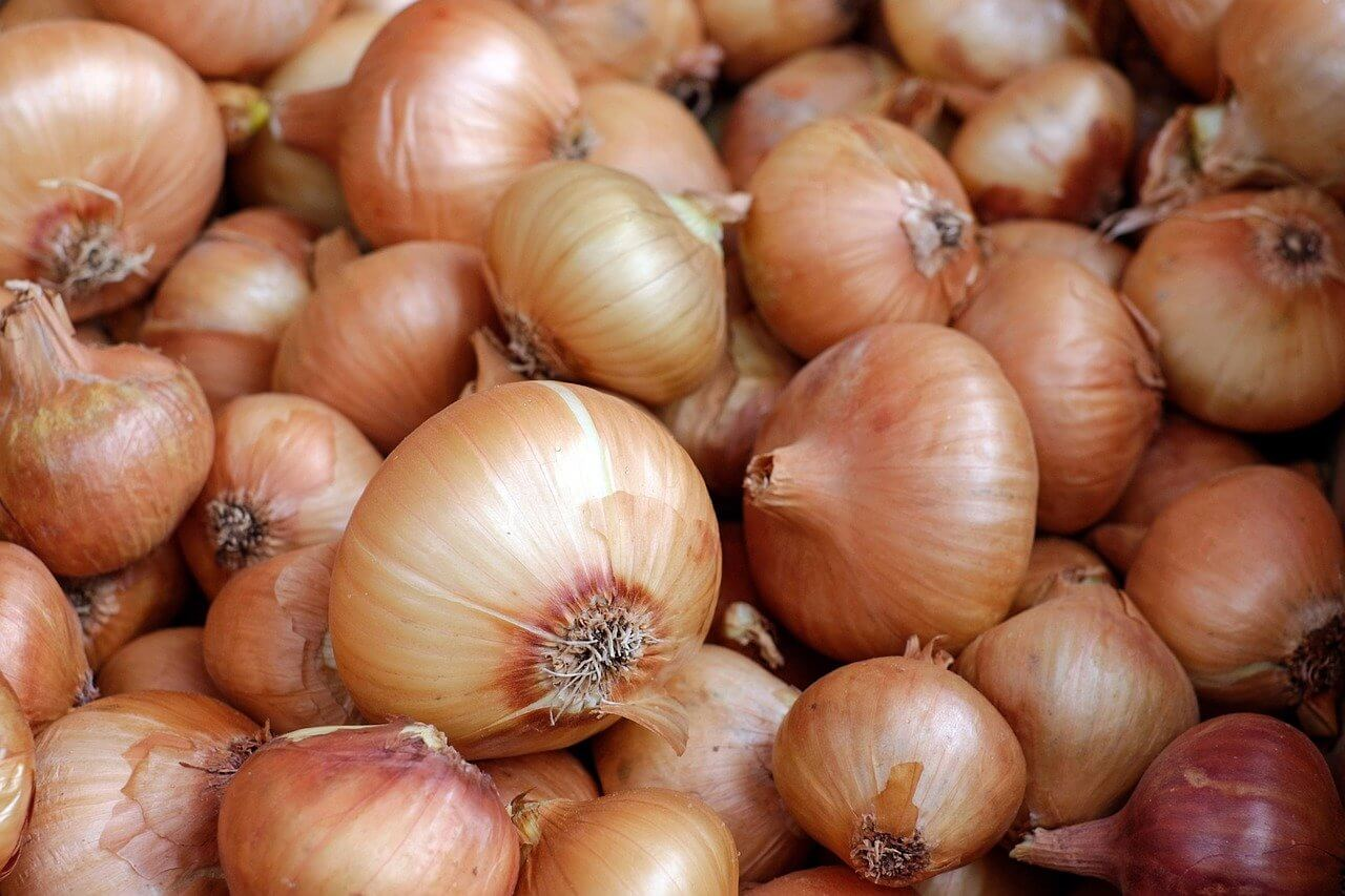 What are onions