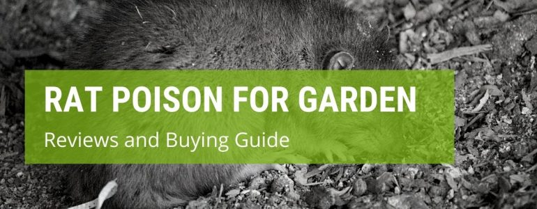 best rat poison for garden