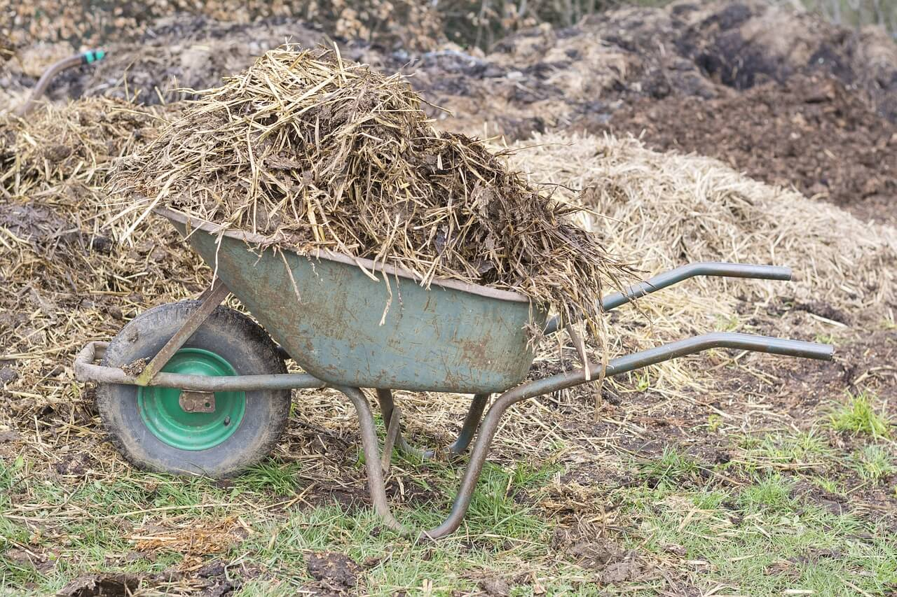 How Often Should You Manure On Allotment